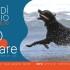 fido-beach