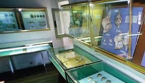 museo conchiglie bellaria